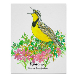 Pôster Pássaro de estado da flor do Bitterroot de Montana