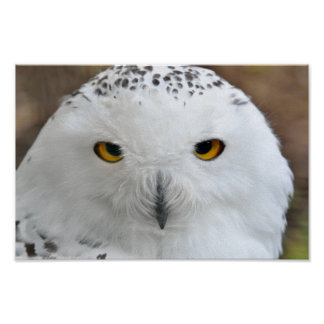 Pôster Pássaro nevado branco da coruja