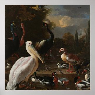 Pôster Pássaros das belas artes