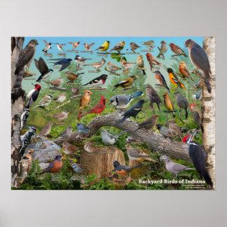 Poster Pássaros do quintal de Indiana