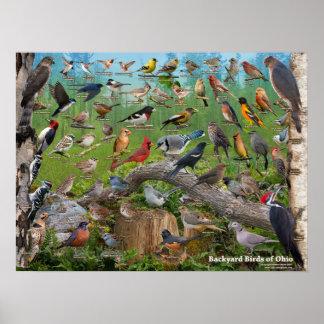 Pôster Pássaros do quintal de Ohio