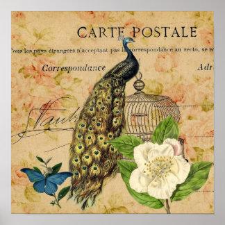 Poster pavão botânico francês do vintage do birdcage da