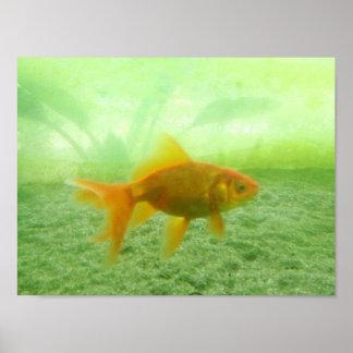 Poster Peixe dourado