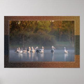 Pôster Pelicanos na névoa por Diana Andersen