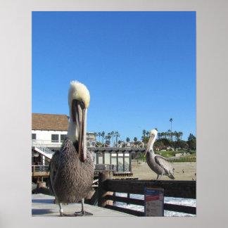 Poster - pelicanos no cais