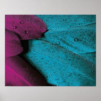 Poster Pena da violeta de turquesa