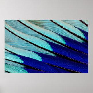 Poster penas Azul-inchadas do rolo
