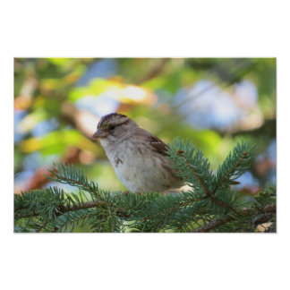 Poster pequeno do pássaro