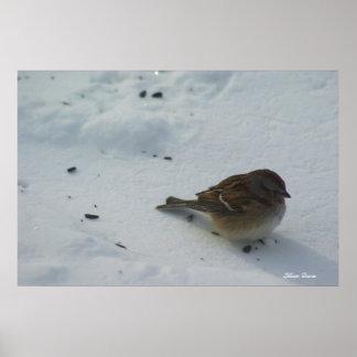 Poster pequeno frio do pardal