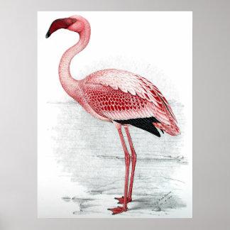 Pôster Pintura cor-de-rosa do flamingo do vintage