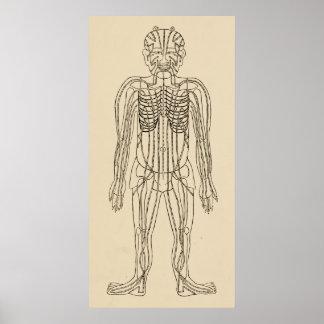 Pôster Pontos meridianos dos caminhos da acupunctura do