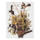 Pôster Poster da família do tordo dos remedos de Audubon