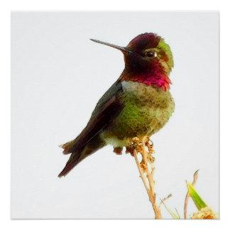 "Pôster Poster do ""colibri"""