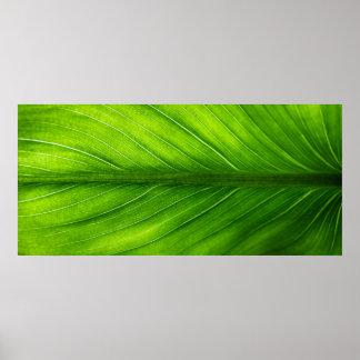 Pôster Poster--Folha de palmeira