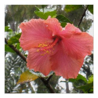 Pôster Poster havaiano da flor