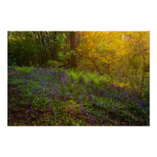 Pôster Poster/impressão ingleses da floresta