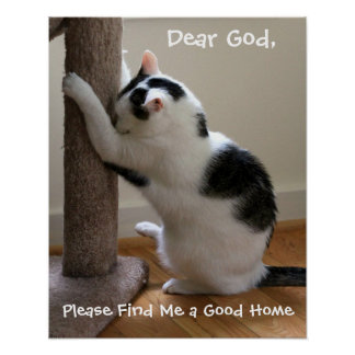 Poster Praying do gato