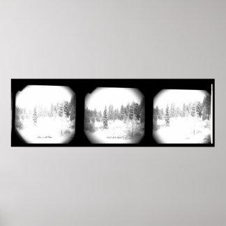 Poster preto e branco bonito dos pinhos nevado
