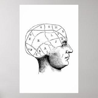 Poster principal da ilustração da anatomia