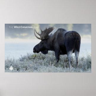 Poster Queda - alce