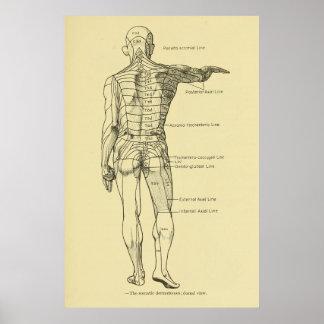 Poster Quiroterapia da carta de sistema nervoso de
