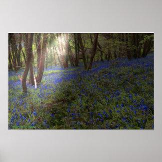 Pôster Raio de sol de madeira de Inglaterra do Bluebell