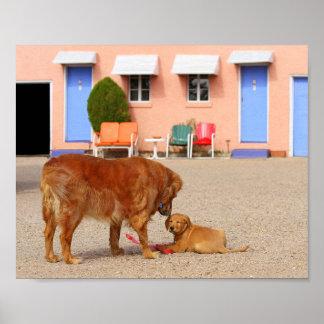 Poster Retrievers dourados no motel azul da andorinha