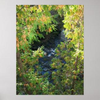 Poster rio através das árvores
