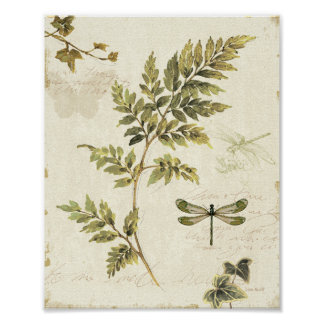 Pôster Samambaias decorativas e uma libélula