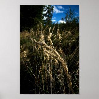 Poster Sementes da grama no vento