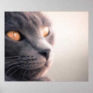 Poster Sheba Cat