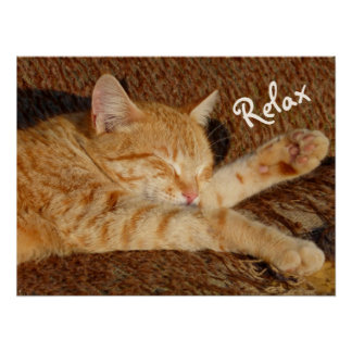 Pôster Siesta - gato de relaxamento