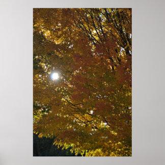 Poster Sol do outono
