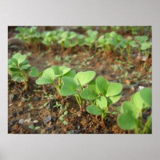 Poster Sprouts do primavera -