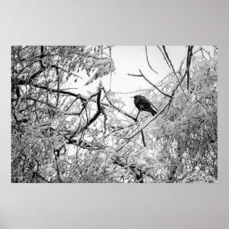 Poster Starling em uma árvore congelada