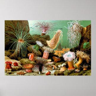Poster subaquático da cena das anêmonas de mar do