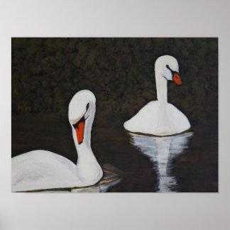 Pôster Swans