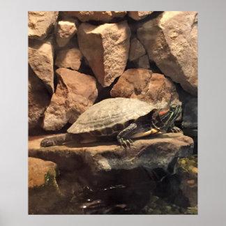 Pôster Tartaruga em uma rocha