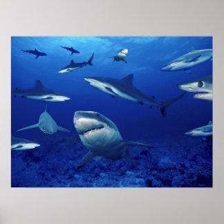 Poster Terrores dos tubarões do profundo