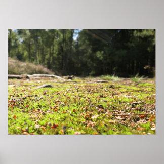 Pôster Trajeto de floresta -