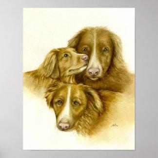 Poster Três cães do Retriever de Tolle do pato de Nova