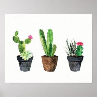 Pôster Trio dois do cacto e do Succulent