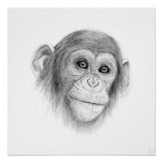 Pôster Um chimpanzé, não monkeying ao redor
