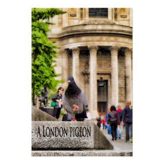 Pôster Um pombo de Londres