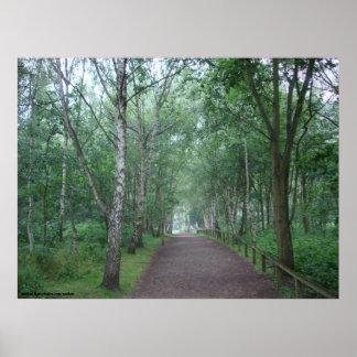 Poster Um trajeto de floresta de Sherwood