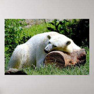 Pôster Urso polar