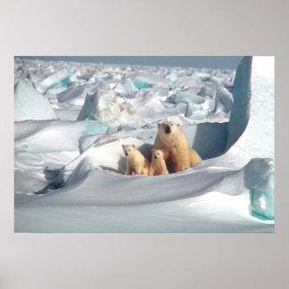 Poster Ursos polares