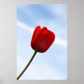 Poster vermelho da tulipa