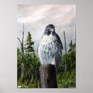 Poster vermelho do falcão da cauda