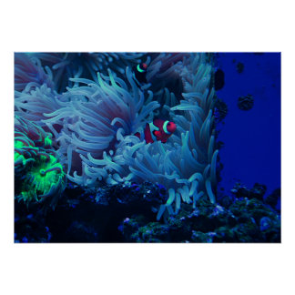 Poster Vida submarina